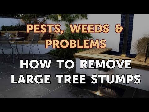 How to Remove Large Tree Stumps