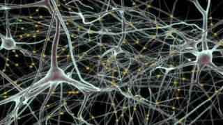 A brain in a supercomputer | Henry Markram