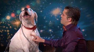 Dog sings Whitney Houston | Belgium