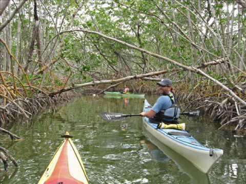 Kayaking the Florida Everglades
