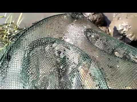 Crayfish net on Fox River 2