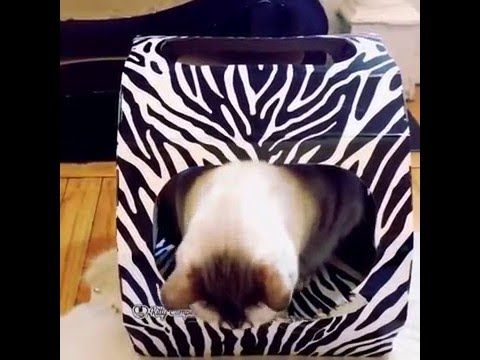 How to keep cats off furniture?