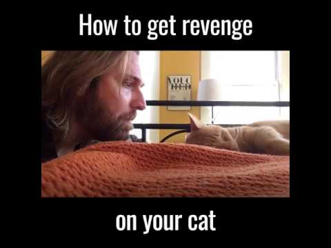 How to take revenge on your cat