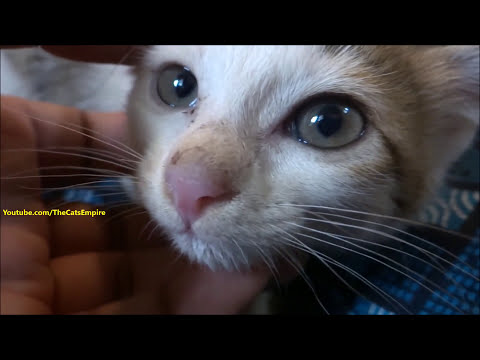 Very angry kittens to friendly cats - Socializing / Taming feral kittens