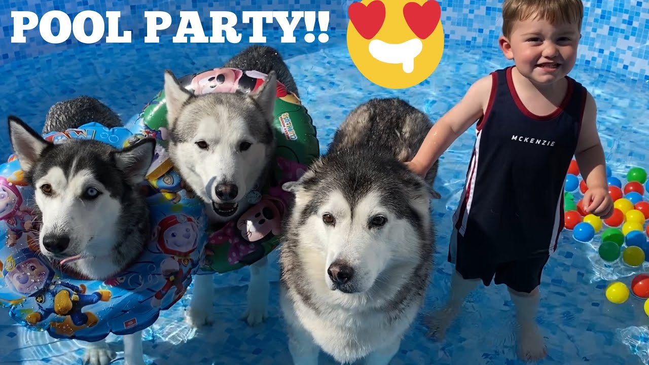 POOL PARTY WITH MY HUSKIES & BABY!!! [CUTEST VIDEO EVER!!]