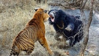 Best animal fights ever. Many videos and playlists available . you can choose whatever you want especially in animals fights. We have also many pages on Google plus as Animal fights community https://plus.google.com/u/0/communities/115369181938936855375