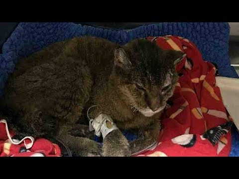 Cat Missing For A Decade Found Its Way Home After California Fires