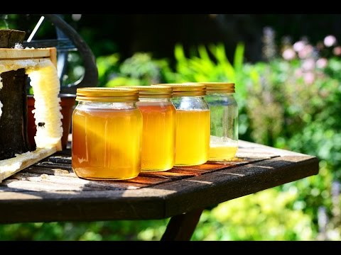 Is eating local honey the cure for allergies? Find out here