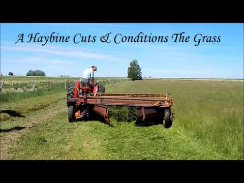 Cutting Grass Hay With a Haybine