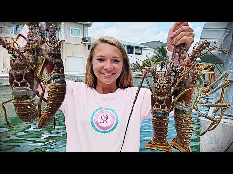 Spiny Florida Lobster and SO MUCH MORE!!! Fans, Goliath Grouper and millions of fish!!!