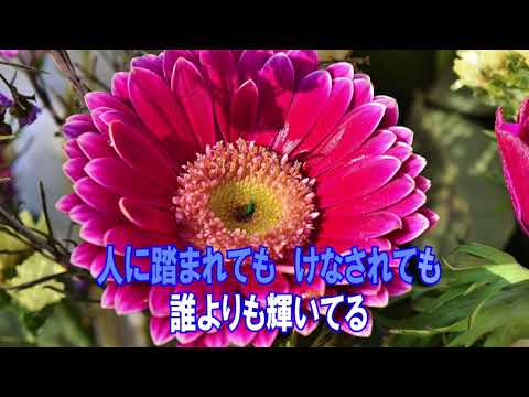 いま、太陽に向かって咲く花 NOBU カラオケガイドあり