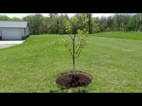 How to Edge & Mulch Ring a Tree  - Landscaping