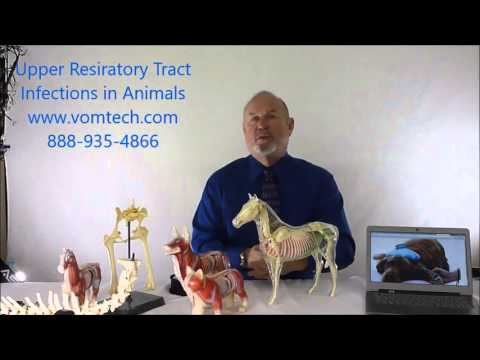 Upper Respiratory Tract Infections in Animals