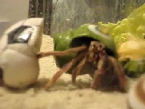 Hermit Crab named