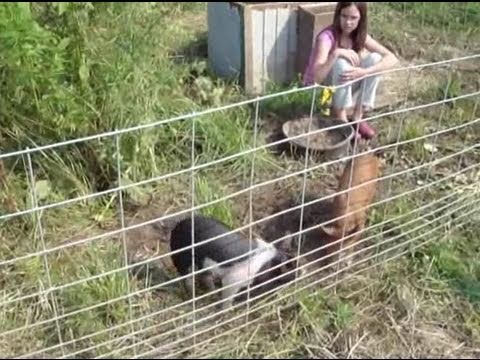 raising pigs without smell and on the cheap
