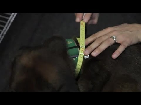 How to Measure a Dog's Neck & Chest Size for a Harness : Dog & Puppy Care