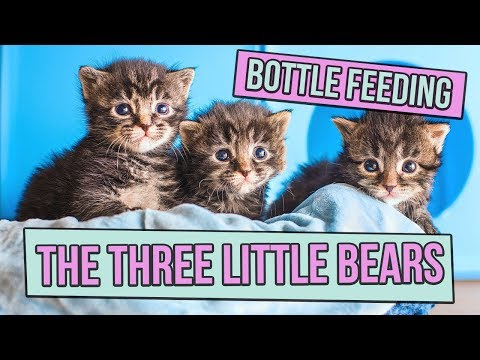 Bottle-Feeding the Three Little Bears