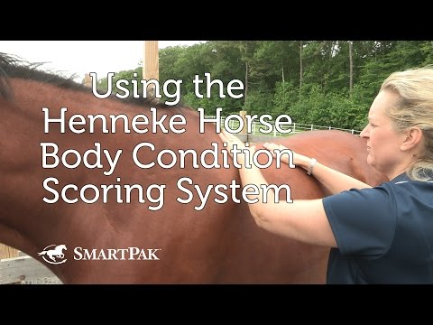 Using the Henneke Horse Body Condition Scoring System