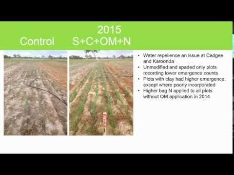 Overcoming constraints on sandy soils – amelioration strategies ...