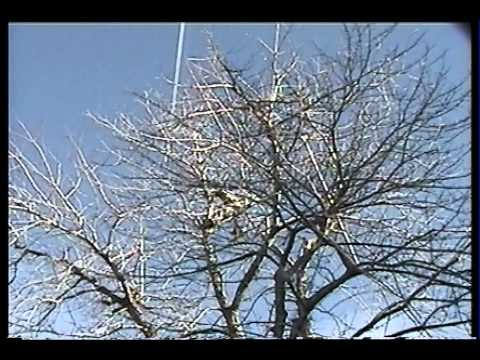 WIENS LAWN and TREE CARE Tutorial: Pruning a Silver Maple (Full length video)