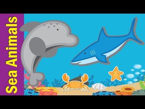 Learn Sea Animals & Water Animals for Kids | Video Flash Cards | Kindergarten | Fun Kids English