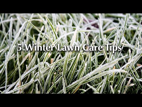 5 Winter Lawn Care Tips