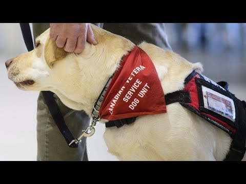 Service dogs help veterans living with PTSD