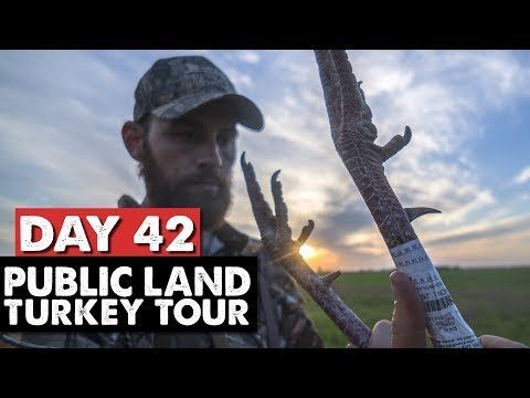 EVENING GOBBLERS WITHOUT A CALL! - Public Land Turkey Tour Day 42