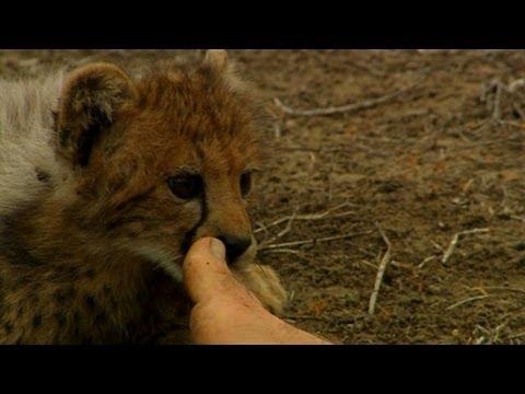 How to Win Over Cheetahs | Man, Cheetah, Wild