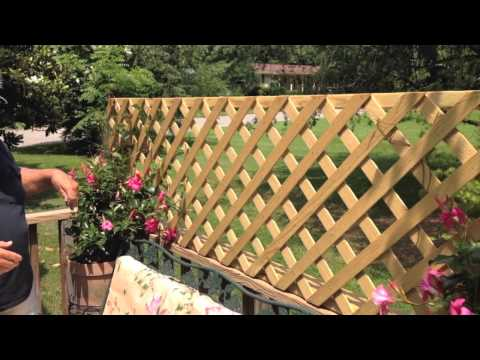 Build A Quick And Easy Trellis For Your Deck