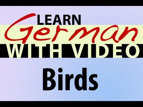 Learn German with Video - Birds