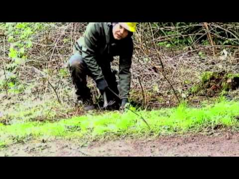 Invasive Removal 7 - Removing Blackberry Root Balls