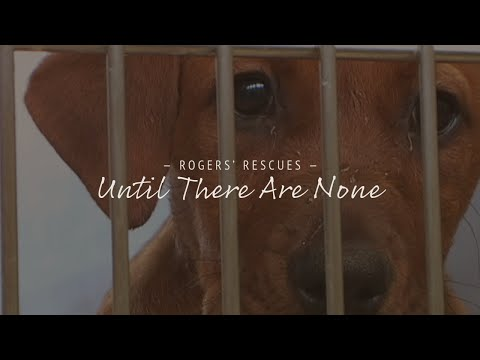 Until There Are None   Dog Rescue Documentary