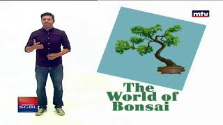 Minal - 01/09/2017 - The World Of Bonsai