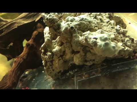 300 gallon fish tank with babies