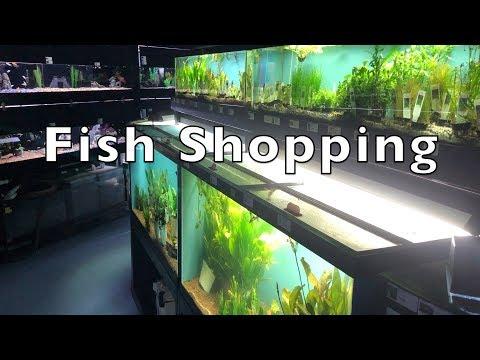 Fish Shopping!