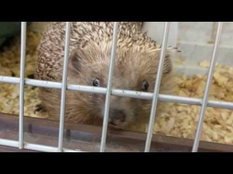 Hedgehog Workout!