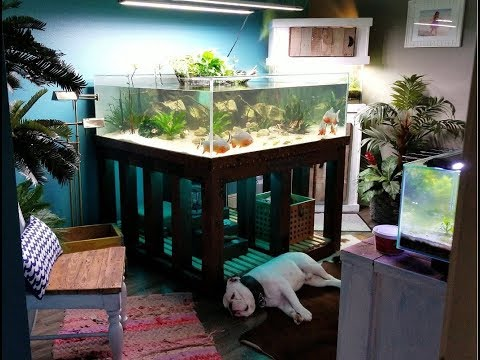 Building A Plywood Bottom Aquarium