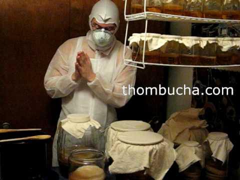 Feeding your Kombucha SCOBY