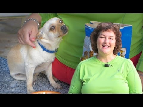 Deworming Dogs Naturally: Prevent Roundworms & Tapeworms in Dogs