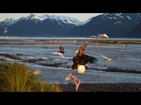 Alaska Day 2