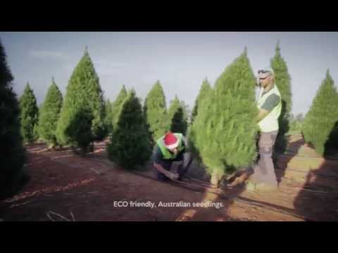 Real Christmas Trees Melbourne