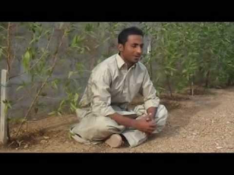 Xxx Mp4 AB Baloch Qammar Jan 3gp Sex