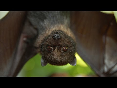 Inside A Bat House