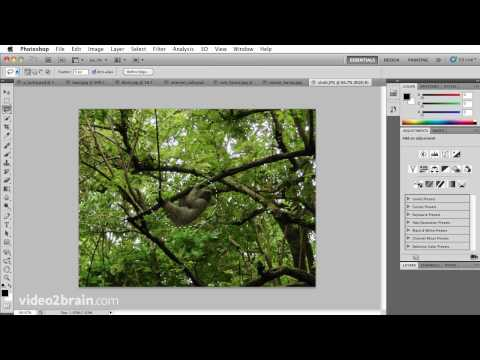 Cutting an object out of a photo using Photoshop CS5