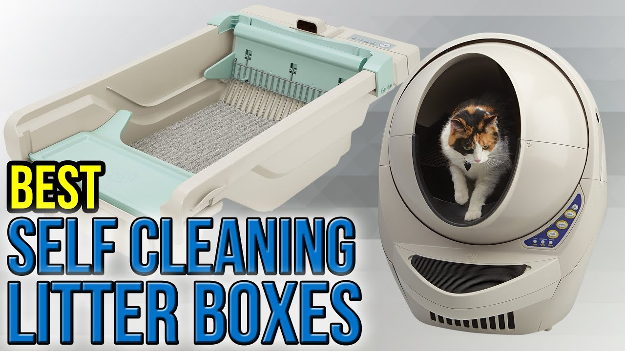 6 Best Self Cleaning Litter Boxes 2017
