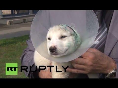 Turkey: See mutilated puppy make new friends at dog pound