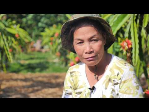 UNA DEKADA The Dragon Fruit Grower Sabtang Batanes  HD