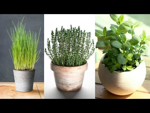 4 No Fail Indoor Herbs and How to Grow Them