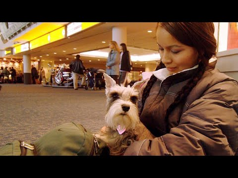 American Airlines has new support animal rules